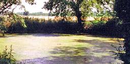 Il Lago Aiso è un lago carsico - Bevagna Perugia Umbria
